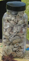 Guess how many shells in the jar