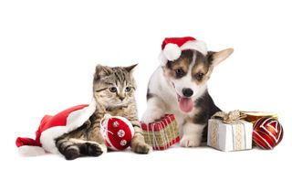 Pets Christmas Fundraiser