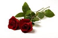 Sell Valentine Roses